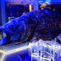 サケビクニンが変すぎて大好きだ!その他@沼津港深海水族館 シーラカンス・ミュージアム